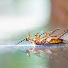 Pest Control Ngunnawal